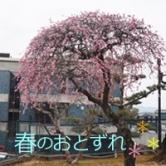 2018.3.7春アイキャッチ